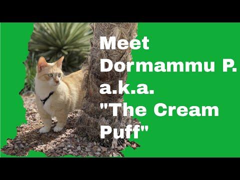 Dormammu The Coated Bambino Kitty Cat Giving Love