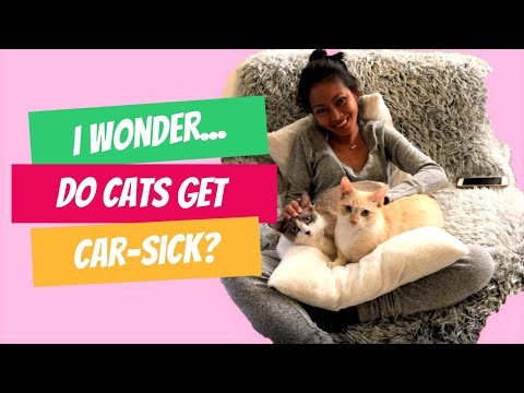 Do Cats Get Car sick? Road trip to Mount Lemmon Arizona